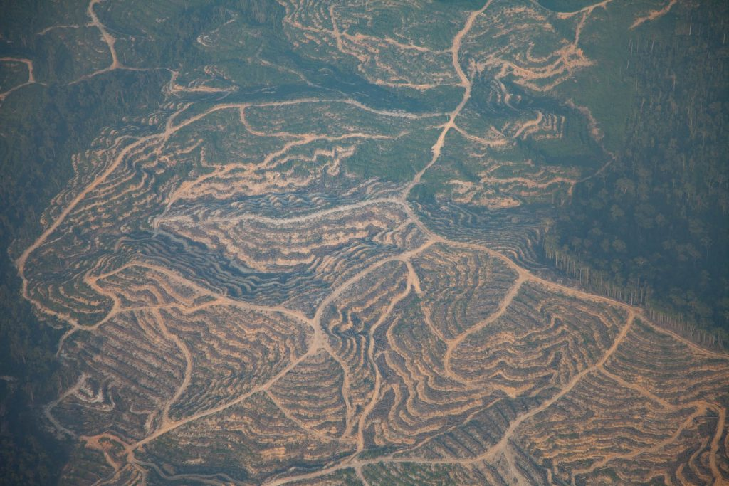 Deforestation in Borneo - Martin Holland